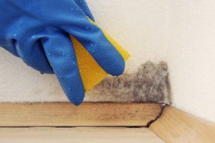 schimmel von wand entfernen alles ber den bau. Black Bedroom Furniture Sets. Home Design Ideas
